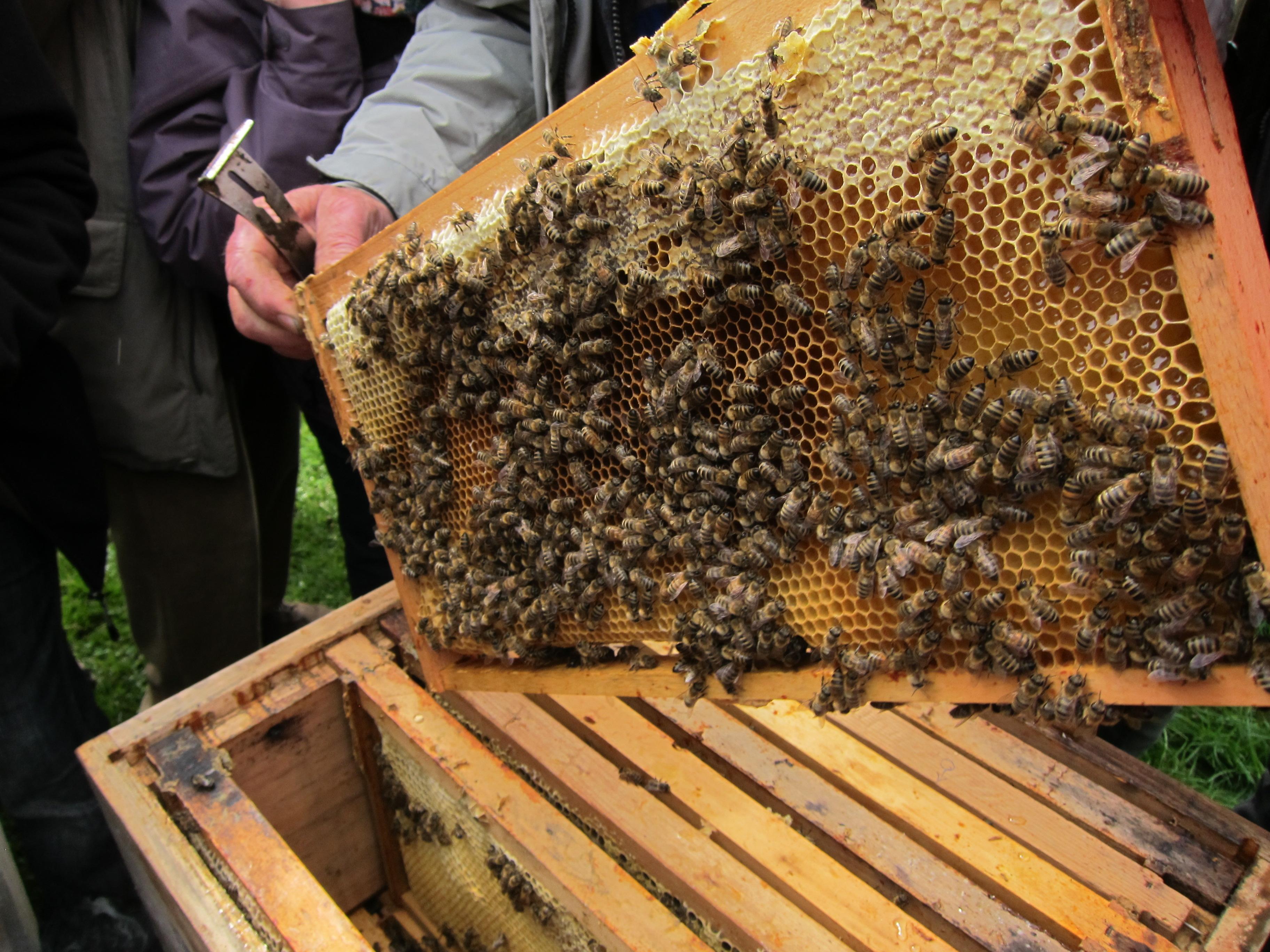 Regionaler Honig